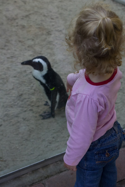 Beverly meets the penguins