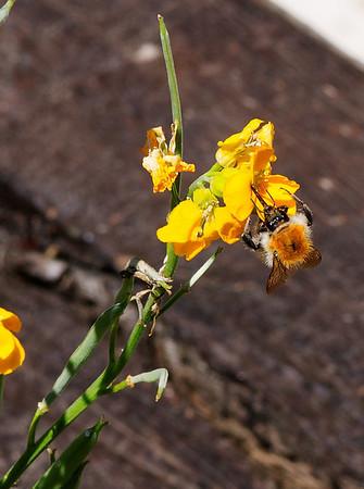 Fleurs & Abeilles