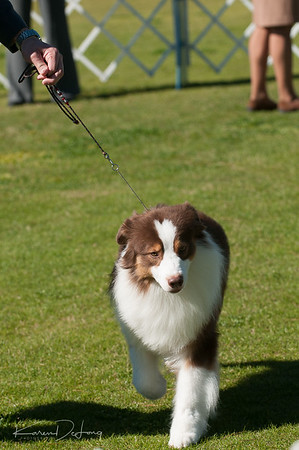20170205_Australian Shepherds_Lost Dutchman Kennel Club-73.jpg