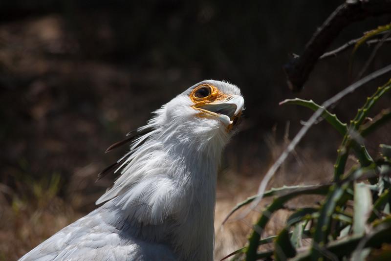 Derrr… I'm a bird