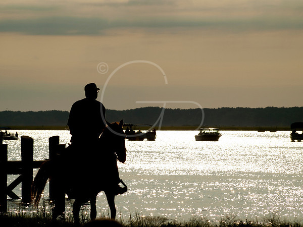 85th Annual Chincoteague Pony Round Up