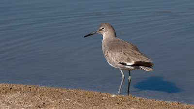 Los Angeles County Bird Image Library
