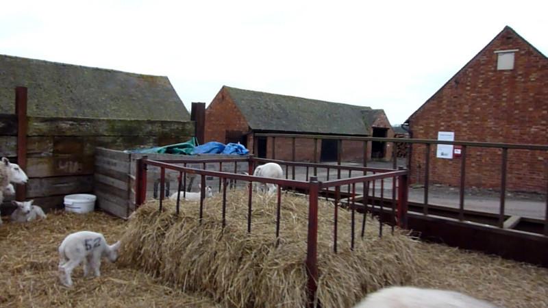 Video Lambing-2 2010-03-10.MTS