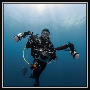 Shark & Diver Portraits Gallery