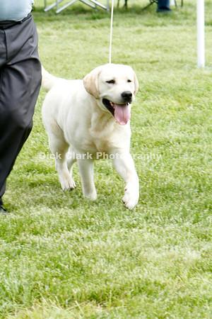 12-18 Month Dog