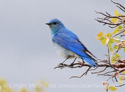 Mesa Verde Birds