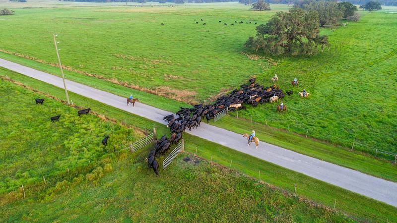 Barthle Cattle  (22 of 27).jpg