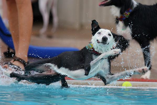 Dog-a-Poolooza 2012