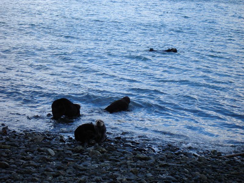 Alaska 2008 102.jpg