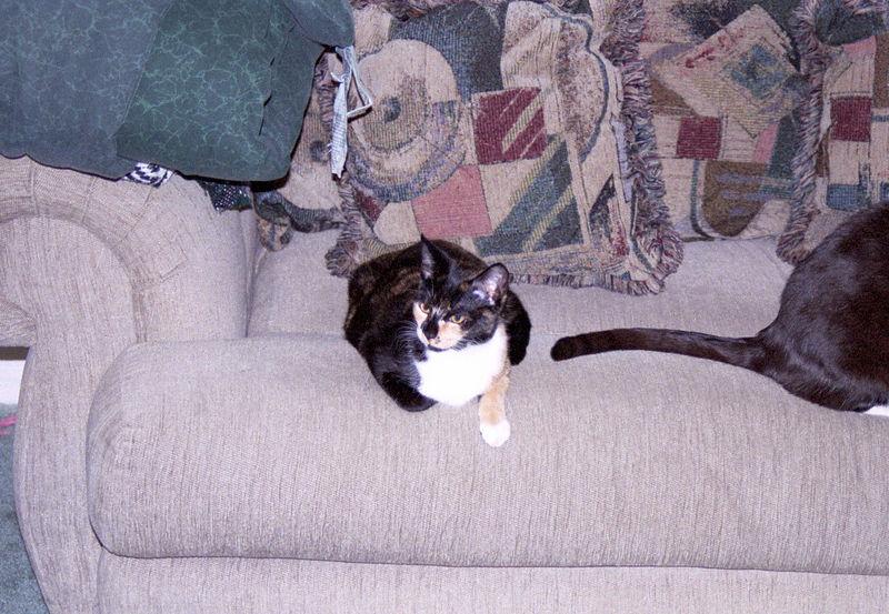 2003 12 - Cats 34.jpg