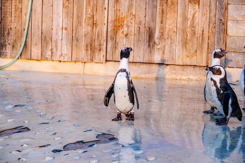 Tonis Zoo-0453.jpg