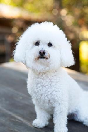 Dog Portraits ~ Charlie + Mady
