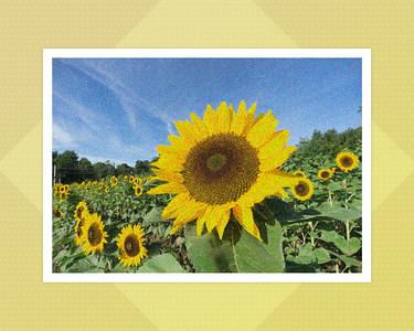 Ten Flower Photographs
