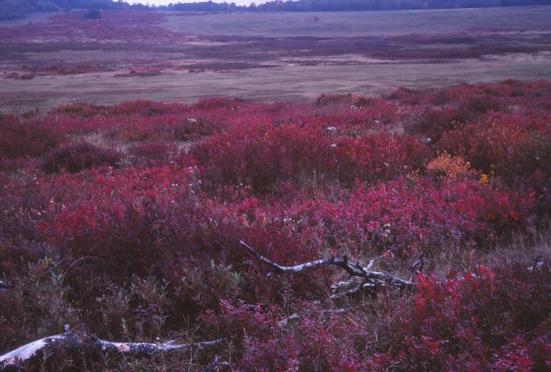 Fall 1984 - 010.jpg