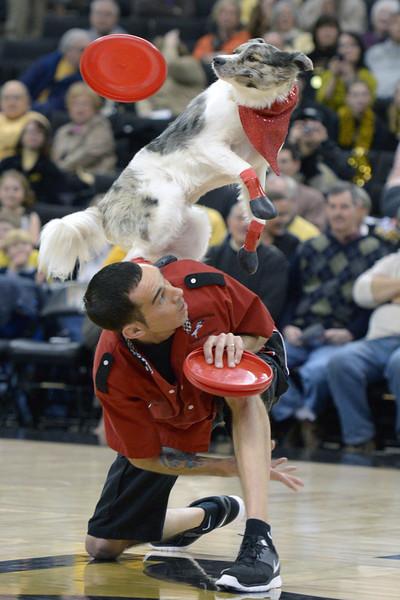Frisbee dogs 07.jpg