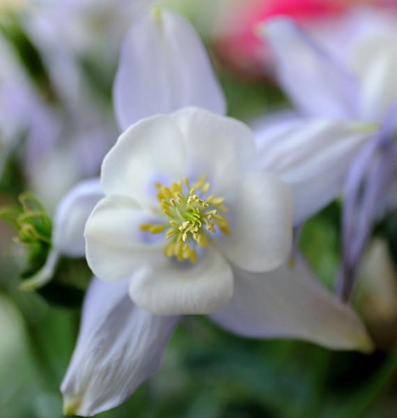 Flowers_010.jpg