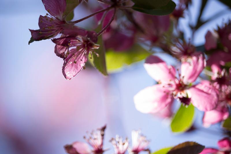 KoRedfield-Floral02.jpg