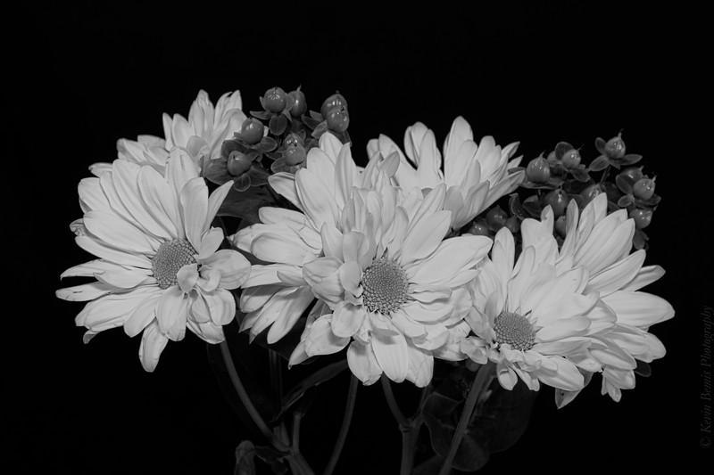 BW Flower1.jpg