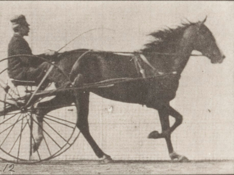 Horse Flode Holden trotting, harnessed to sulky with driver