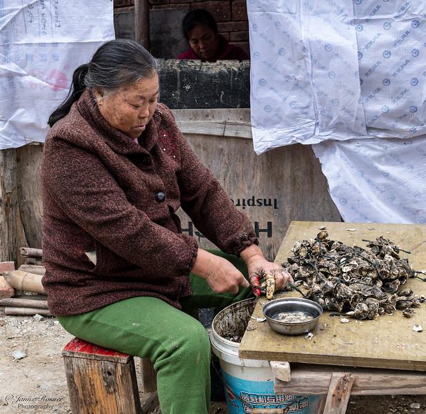 Shellin oysters