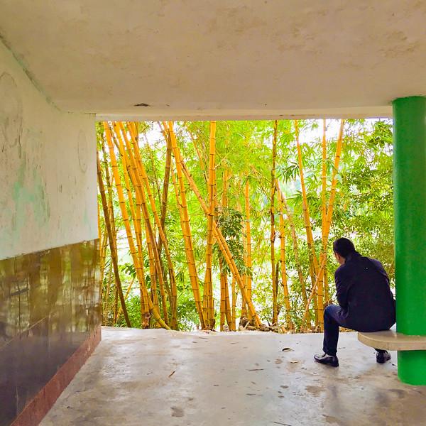 Bamboos. China