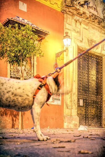 Tied dog, San Lorenzo square, Seville, Spain