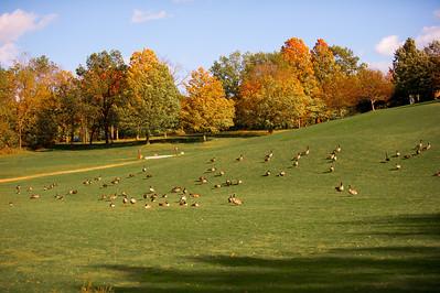 Whitnall Park Fall 2014