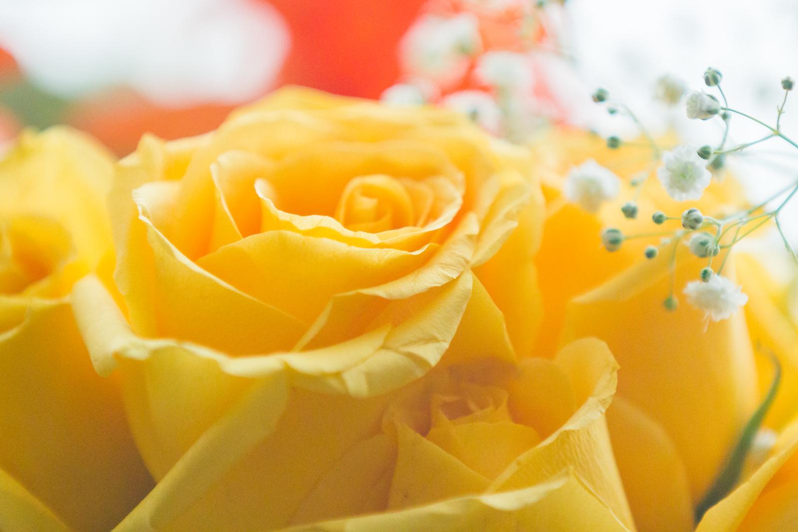情人节,玫瑰花的语言