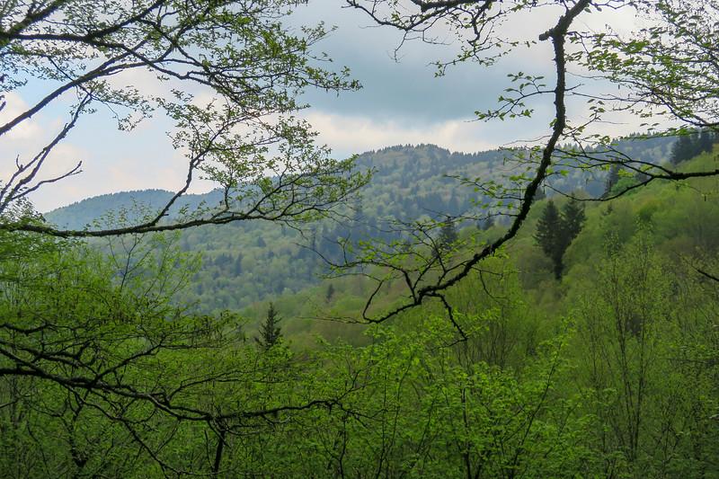 Mountains-to-Sea Trail -- 5,460'