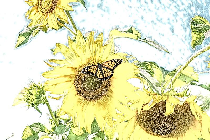 Monarch Yellow Sunflower.jpg
