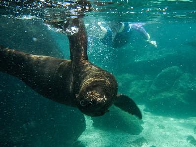 Snorkeling Isla Lobos