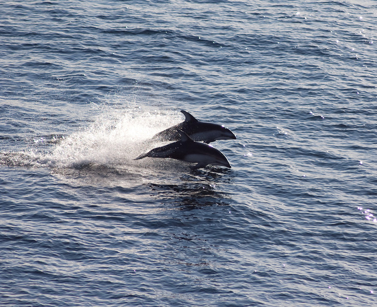 Following the cruise ship were several dolphins.  They seemed to love to play in the wake.