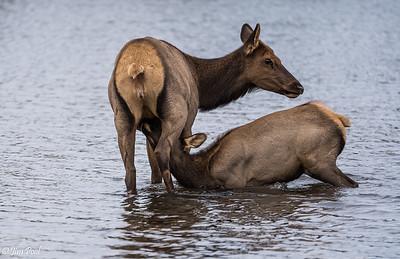 Colorado Elk trip 2019