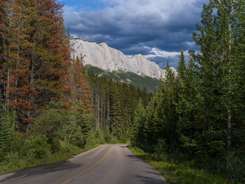 Highway passing through forest, Yellowhead Highway, Jasper National Park, Jasper, Alberta, Canada