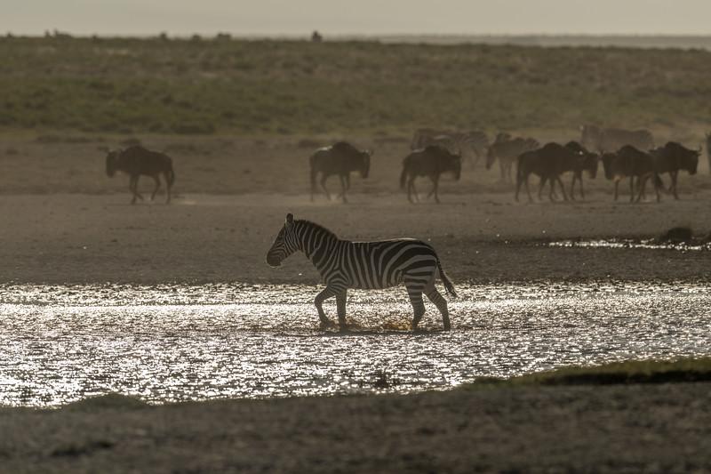 Tanzania_Feb_2018-344.jpg