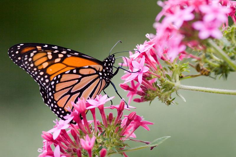 butterflyclimbtotop_7285.jpg