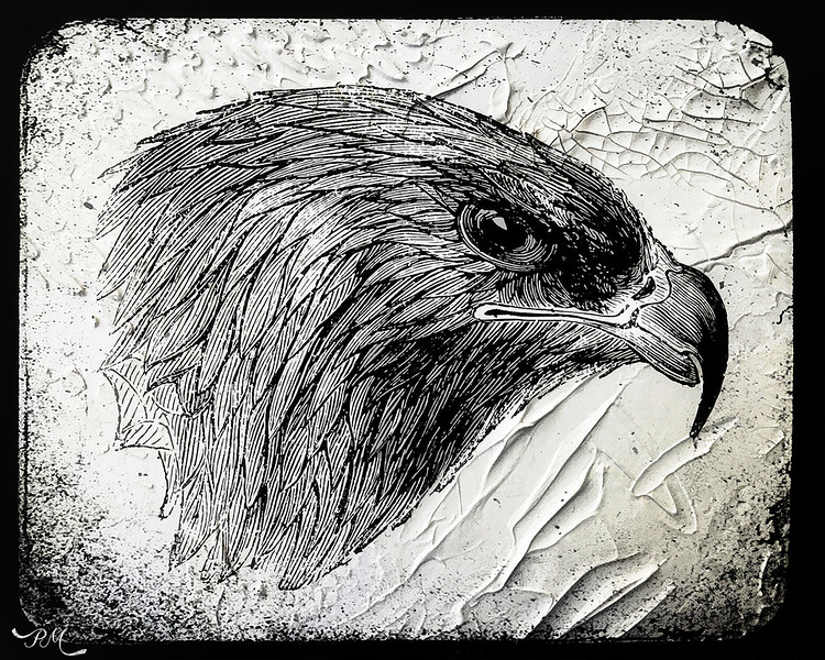 Mr. Eagle.