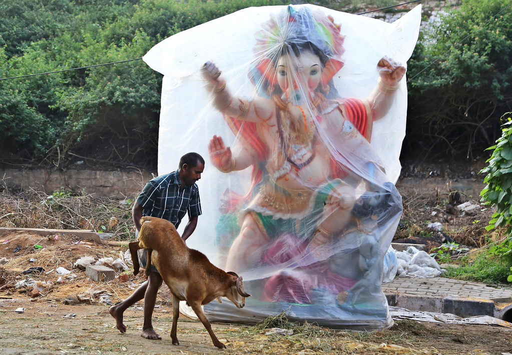 . A trader pushes his goat past an idol of elephant-headed Hindu god Ganesha as he takes it to sell ahead of the Muslim festival of Eid al-Adha in Bangalore, India, Monday, Sept. 12, 2016. Eid al-Adha, or the festival of sacrifice, is celebrated by Muslims around the world to commemorate Prophet Ibrahim\'s test of faith. During the Eid, Muslims slaughter livestock and distribute the meat to the poor. (AP Photo/Aijaz Rahi)