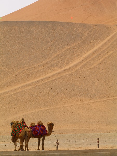 Camels at Turpan caves - Kaitlin Lutz