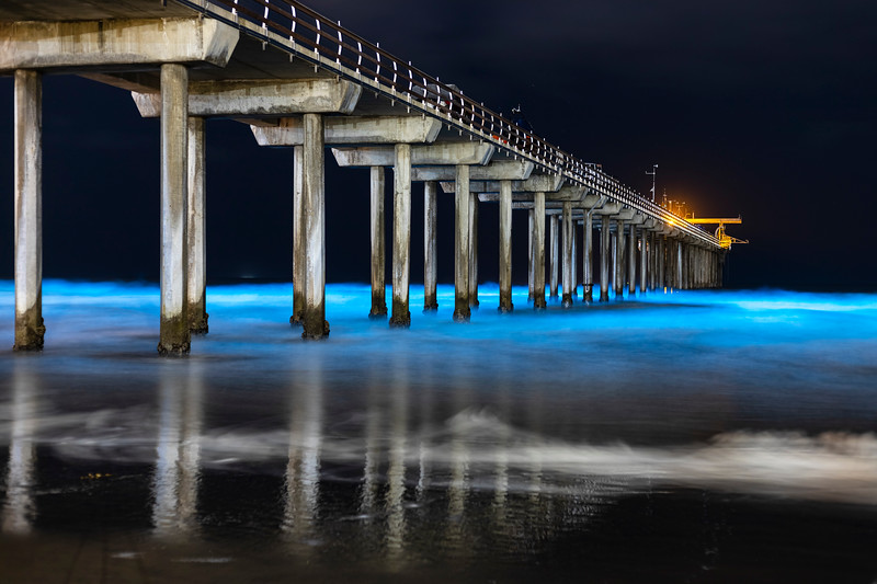 Beautiful Blue Bioluminescence at Scripps Pier