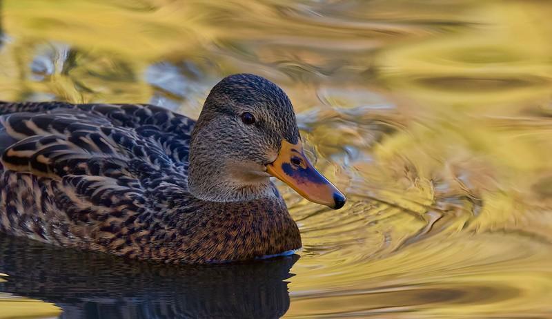 Chichester Wetlands, Kelowna, BC