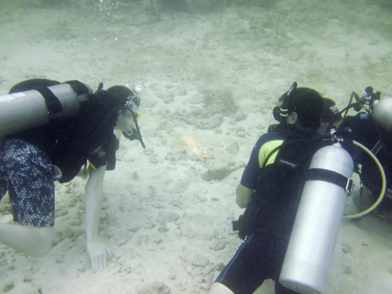 islamorada-diving-63.jpg