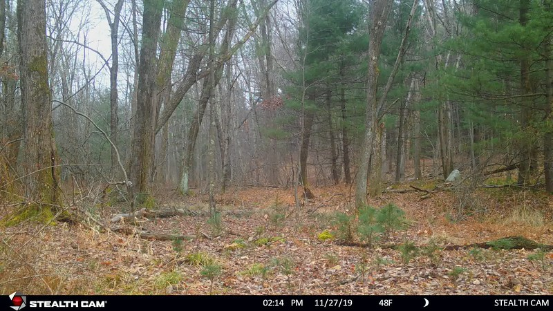 11-27-19 through 12-1-19...a few deer...removed camera and brought it home after seeing man with his dog