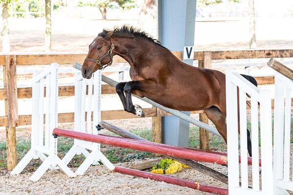Horse 9 - Athena