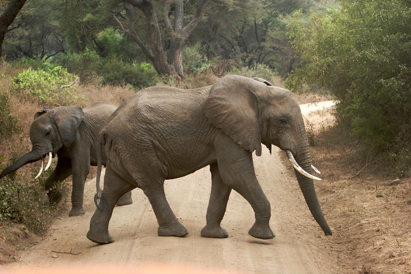 Tanzania - 36.jpg