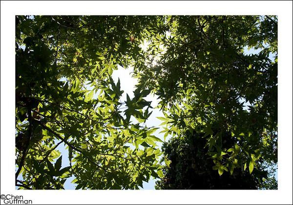 09-06-2010_12-41-37.jpg