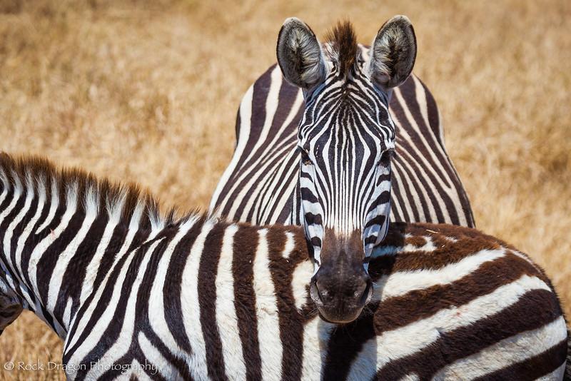 Ngorongoro-47.jpg