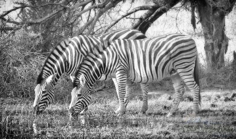 Botswana-20110721-13724-Edit-Edit-Edit.jpg