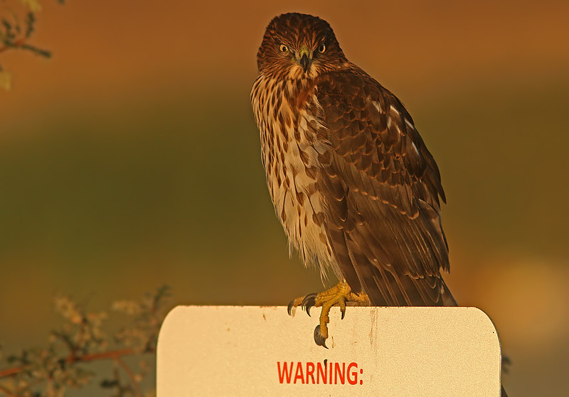 redshouldermorningwarning1600neated.jpg