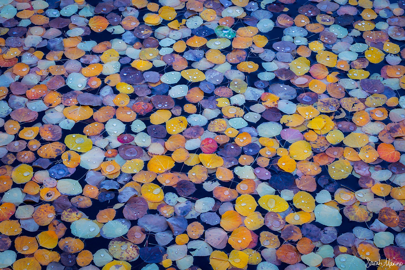 Autumn Gems